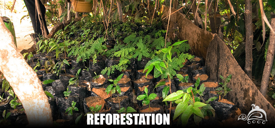Reforestation_Slide